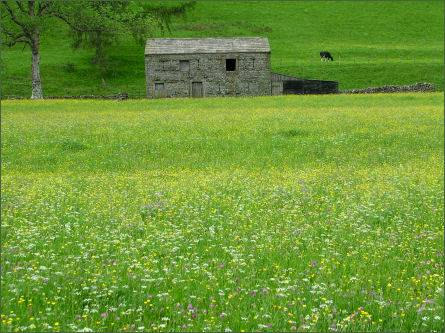 Muker Wildflower Meadows